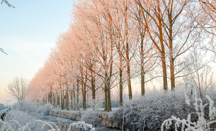 natuur winter